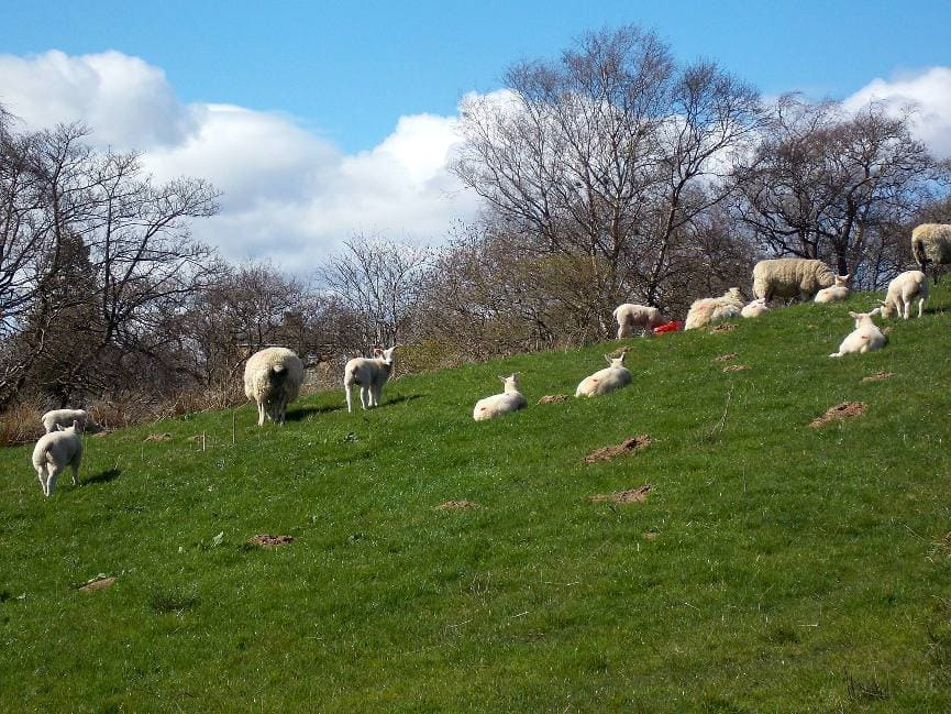 Spring and lambing time
