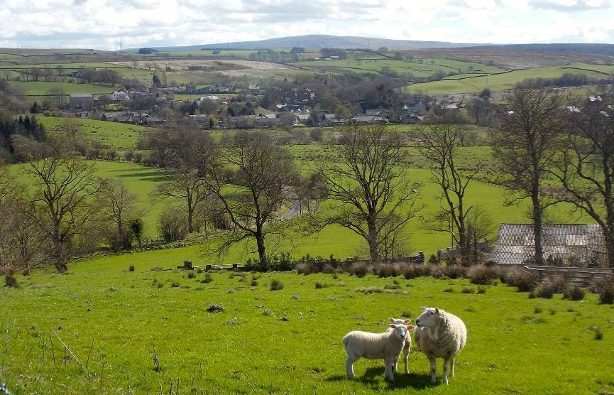 A pair of Spring Lambs overlooking Gilsland