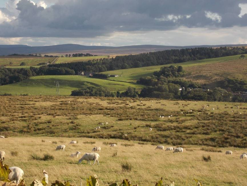 Sheep on the stunning landscape view