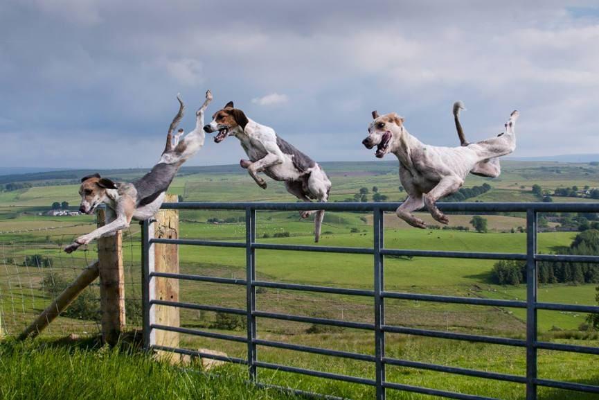 The 'Triple Jump'